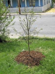 Раждането на едно дърво